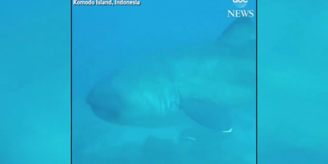 Diver encounters rare megamouth shark