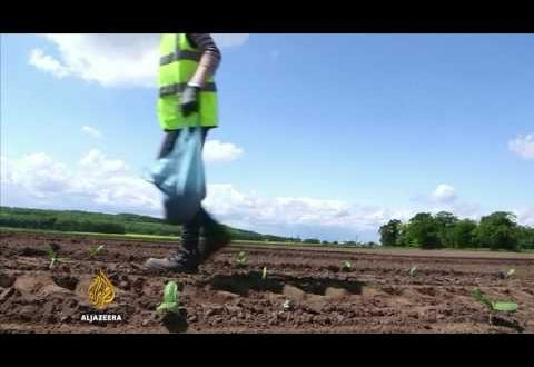 Brexit: A threat to Britain's food security? – Counting the Cost