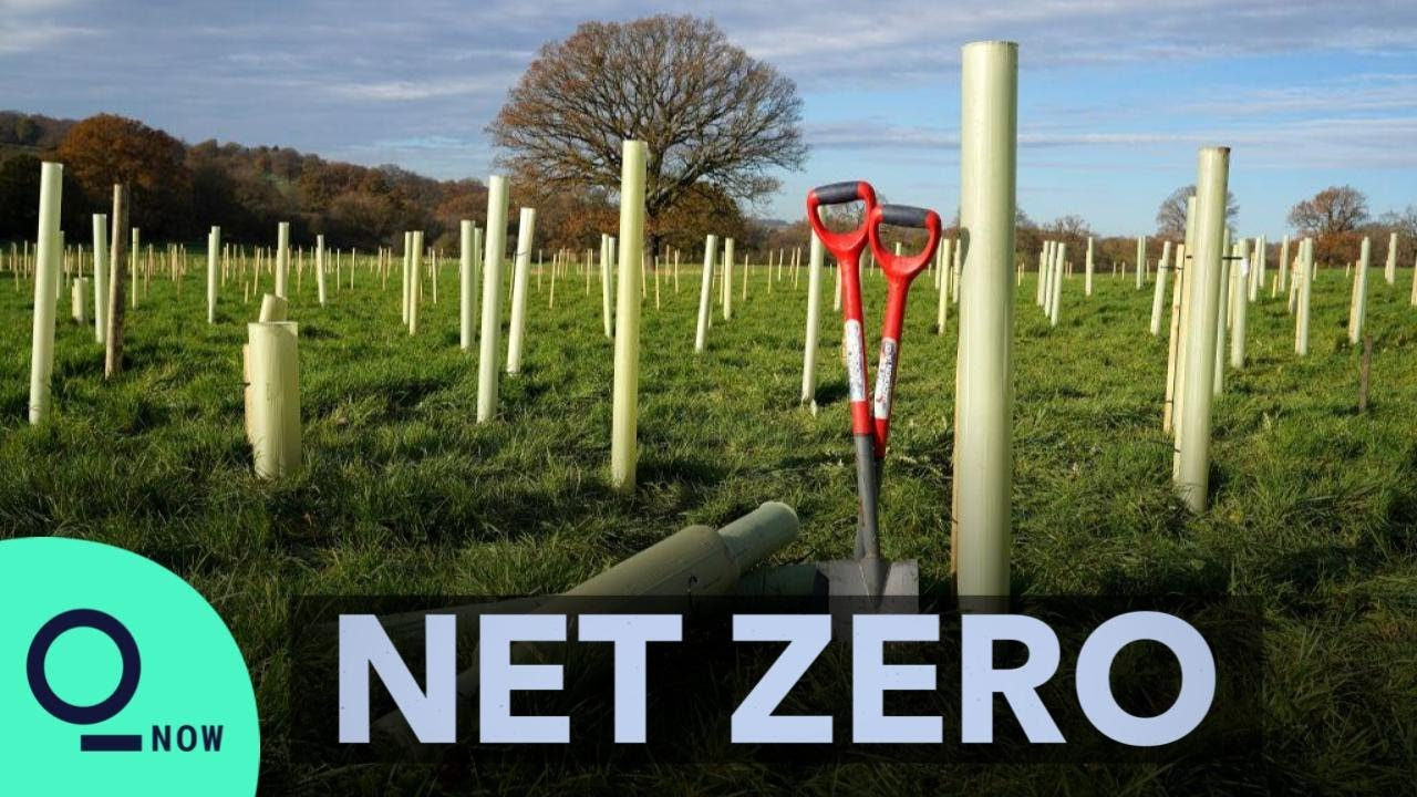 Trees Are Not Enough to Save the Climate | Net Zero